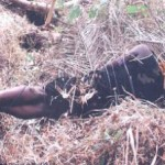 32yrs Old Man Butchers Sister and Buries Brothers Alive In Abia State (See Photos)