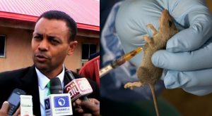 Lassa Fever Outbreak: Enugu Government Confirms Death Of One Person