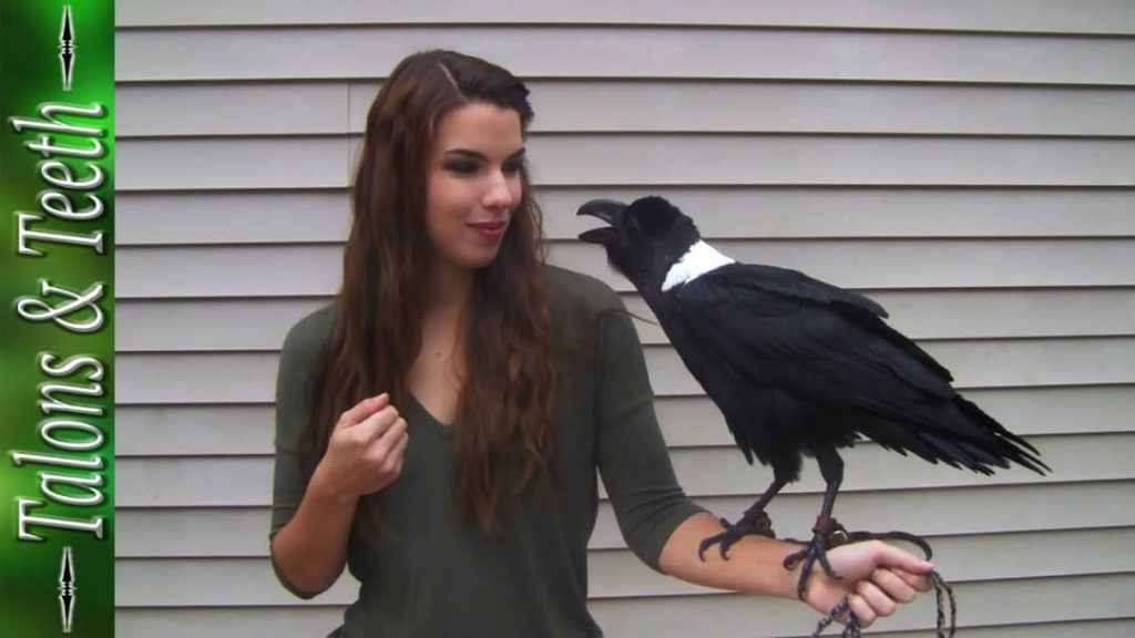 This White-Necked Raven Sounds Exactly Like A Human! (Photos
