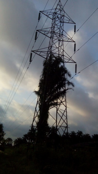 Palm Tree Grows Into Electric Pole And High Tension In Asaba (Pics)