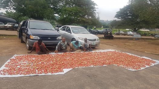 JUST IN: – illegal Arms Dealers Nabbed With 10,000 Live Cartridges In Ibadan
