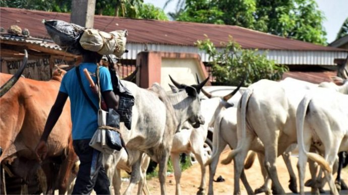Labourer Survives Herdsmen Attack In Anambra School – NAIJA