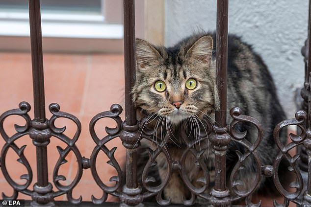 Cat And Owner Both Die After Contracting Coronavirus In Spain