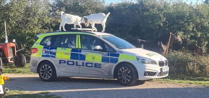 police goats