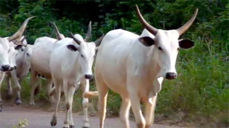 DSS Invites Cattle Dealers Over Food Blockade Of South